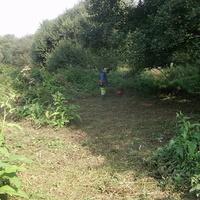 Sur le site du vallon sauvage de Quevert, la zone humide est entretenue, les végétaux caractéristiques sont préservés.